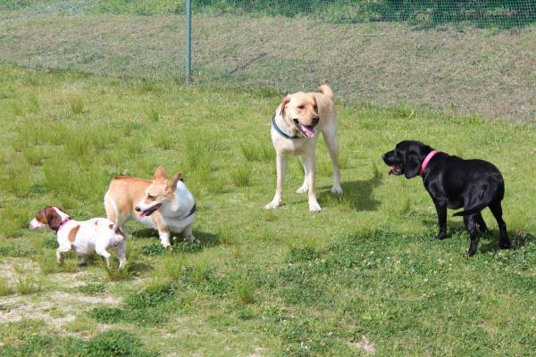多犬種オフ会27