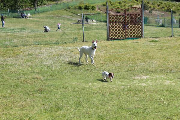 多犬種オフ会29