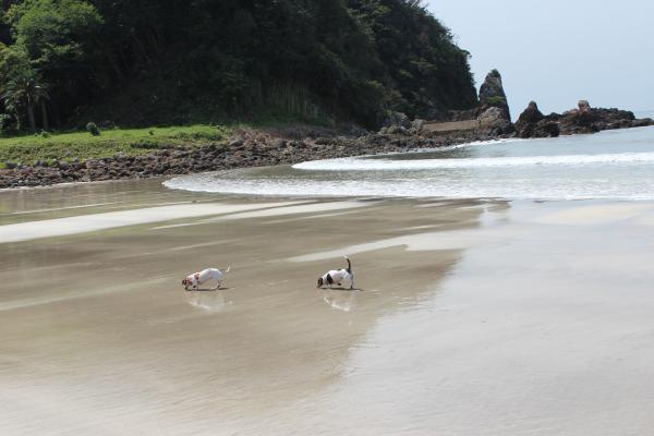 弓ヶ浜散歩2