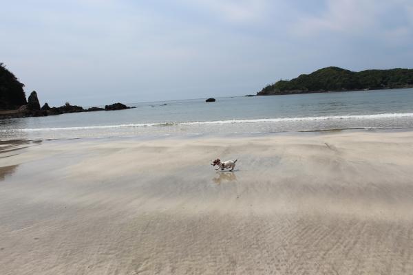 弓ヶ浜散歩5