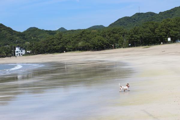 弓ヶ浜散歩6