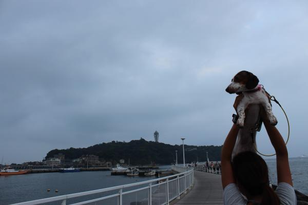 鵠沼散歩7