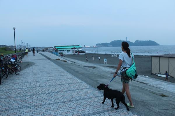 鵠沼散歩9