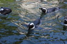 超誇大妄想狂の日常-ペンギン