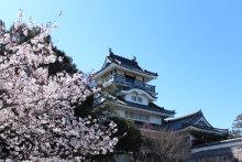 超誇大妄想狂の日常-桜1