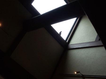 mukudori1.jpg