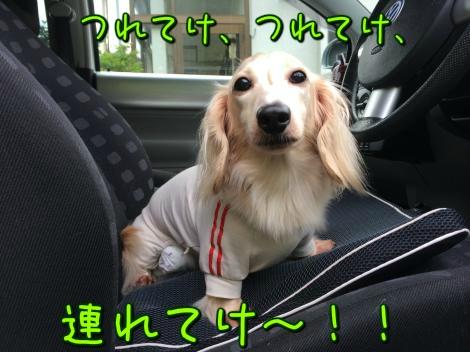 連れてけ~!!