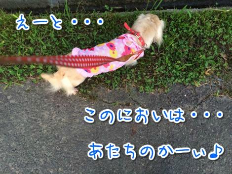 20140903012537.jpg