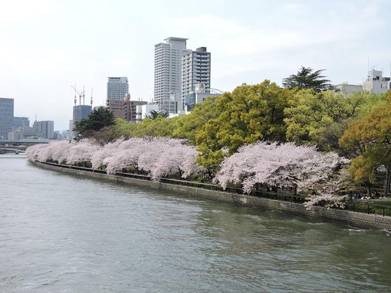 春の南天満公園 (2)
