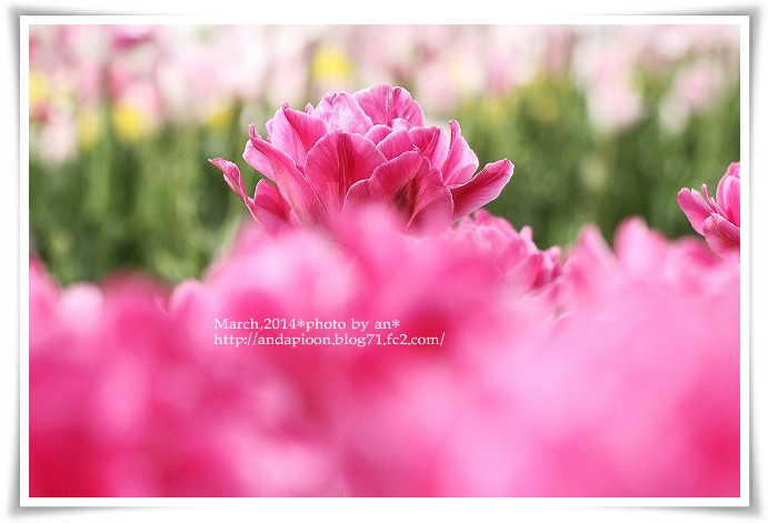 20140331_0222.jpg