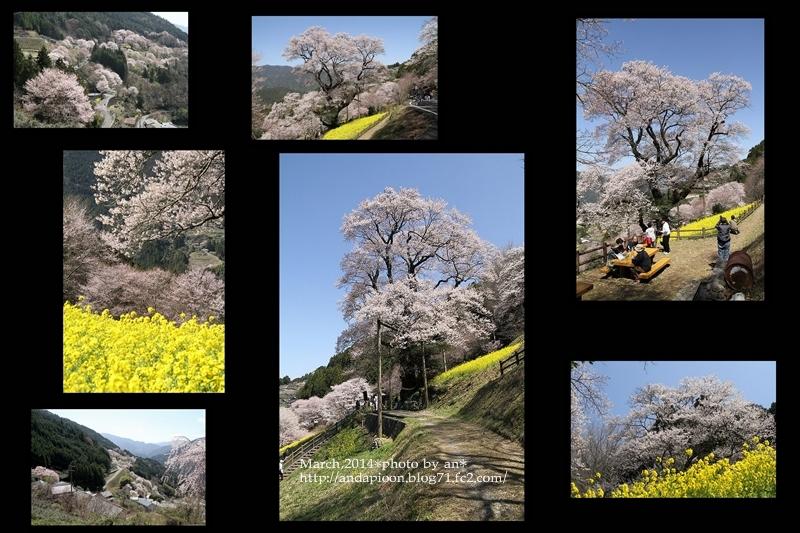ひょうたん桜としだれ桜3・27