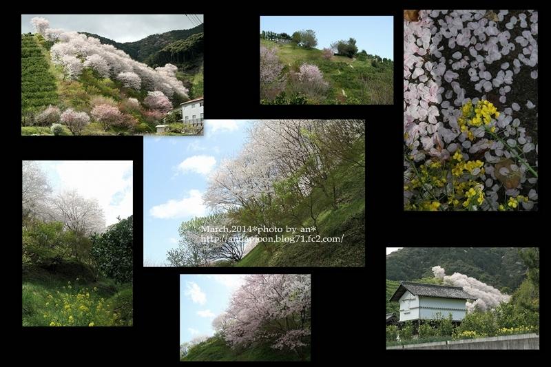 宮地さんちの桜3・301
