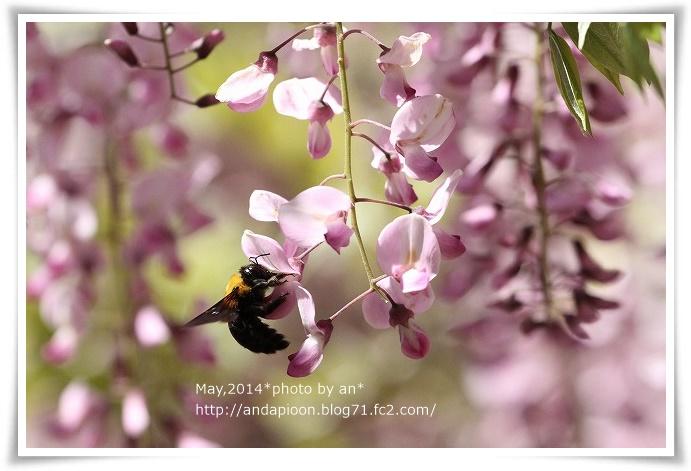 20140501 IMG_0576