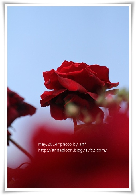 20140501 IMG_0985