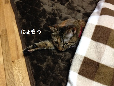 IMG_3267.jpg