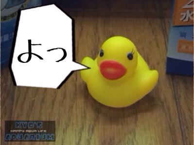 fc2blog_20140326211832f90.jpg