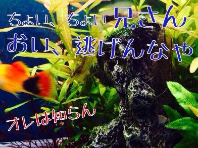 fc2blog_20140423183022cfa.jpg
