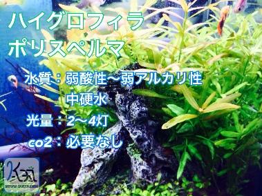 fc2blog_201405141312126dc.jpg