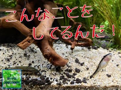 fc2blog_20140709170945e5c.jpg