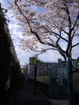 20140401ソメイヨシノ(荒川7丁目) (3)