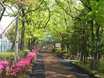 20140422サツキツツジ(荒川2丁目口) (7)