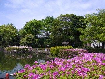 20140428オオムラサキ (1)
