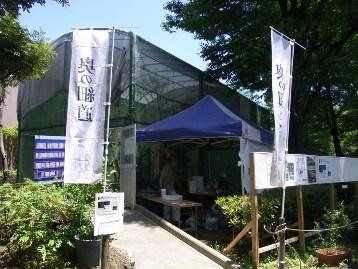 20140614オオムラサキ (15) - コピー