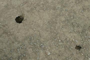 20140729セミの穴