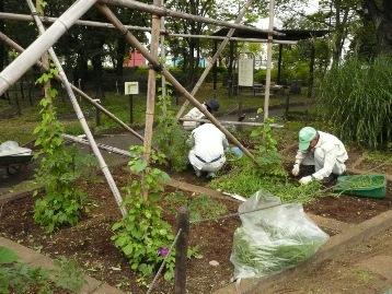 20140904野草園 (2)
