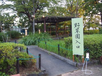 20140913秋の七草と鳴く虫の会 (48)