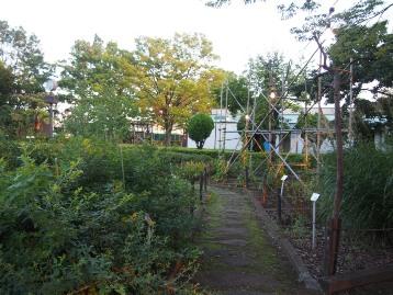 20140913秋の七草と鳴く虫の会 (49)