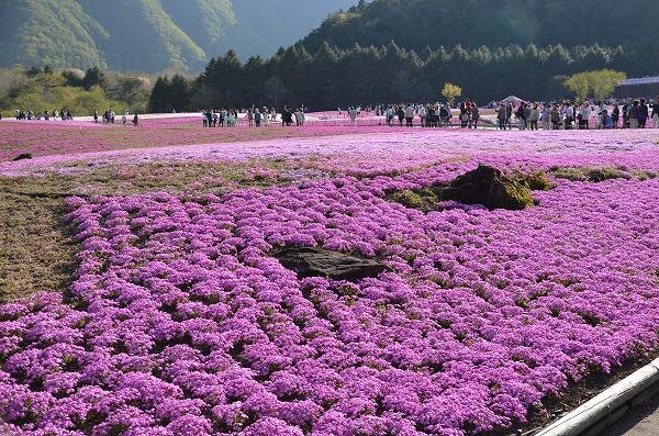 富士山めぐり_140511_5181