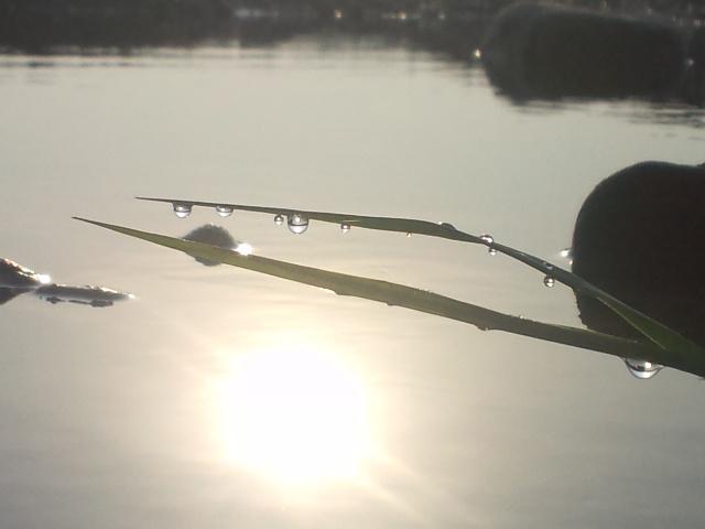 0525水辺の風景