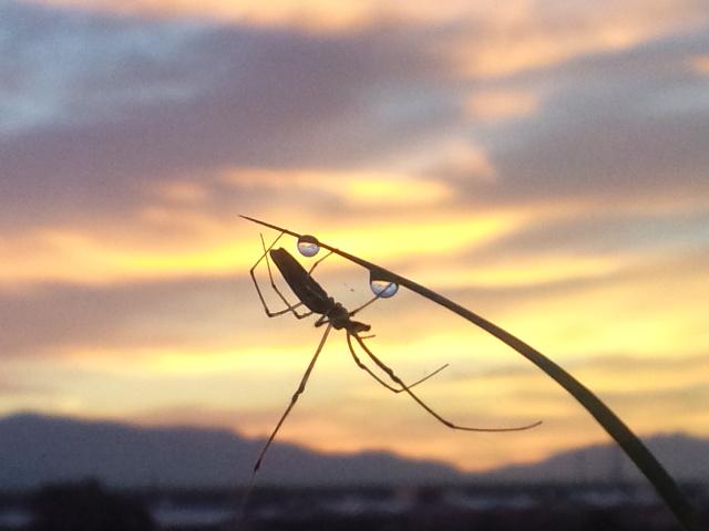 0722蜘蛛