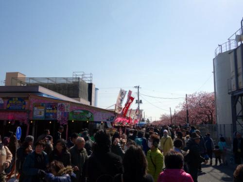 [2014河津さくら祭り]p003