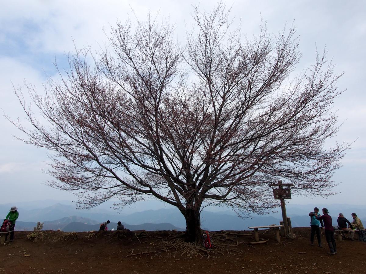 [2014棒ノ折山]p224