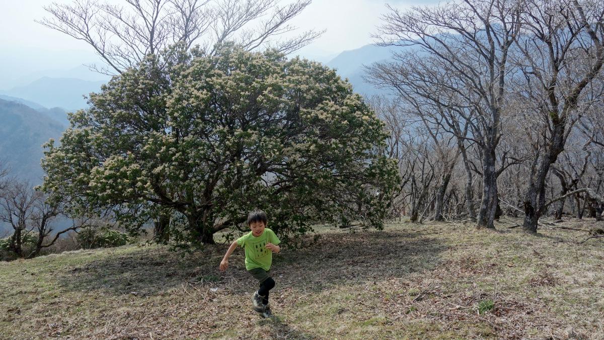 [2014丹沢(春)]p049