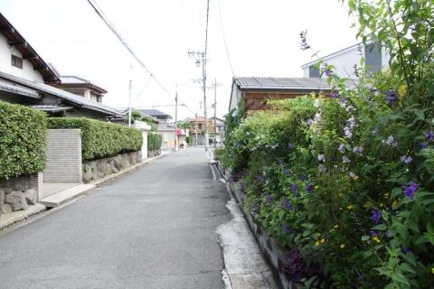 7D2_1340.jpg