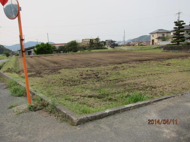 今年植えた圃場