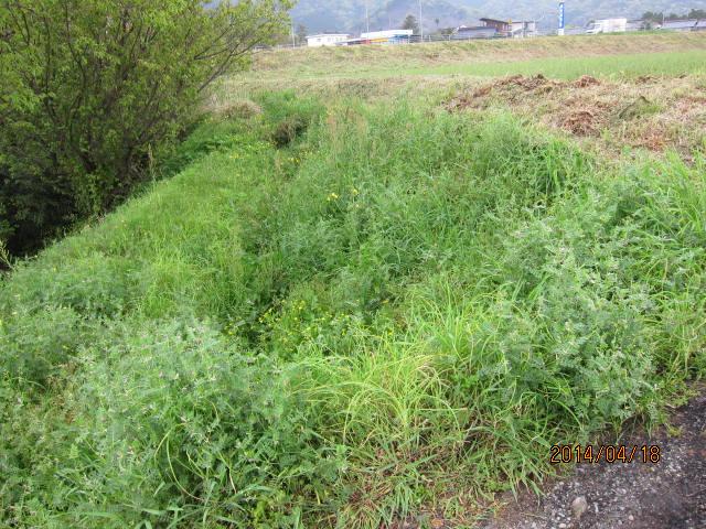 kamijinbata3002水路側前