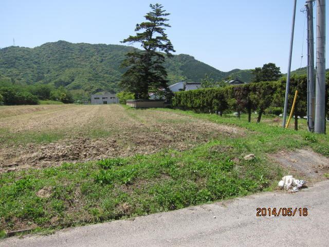 大豆畑の雑草
