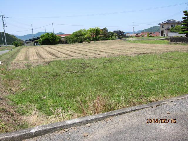 人参畑の雑草