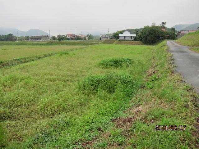 草の多い圃場1