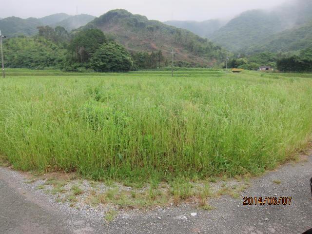 草の多い圃場2