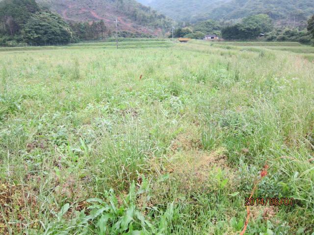 草の多い圃場2-1