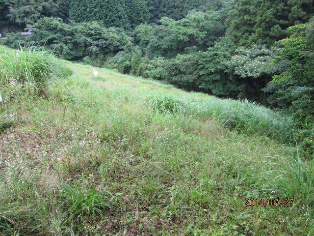 新堤草刈り前1