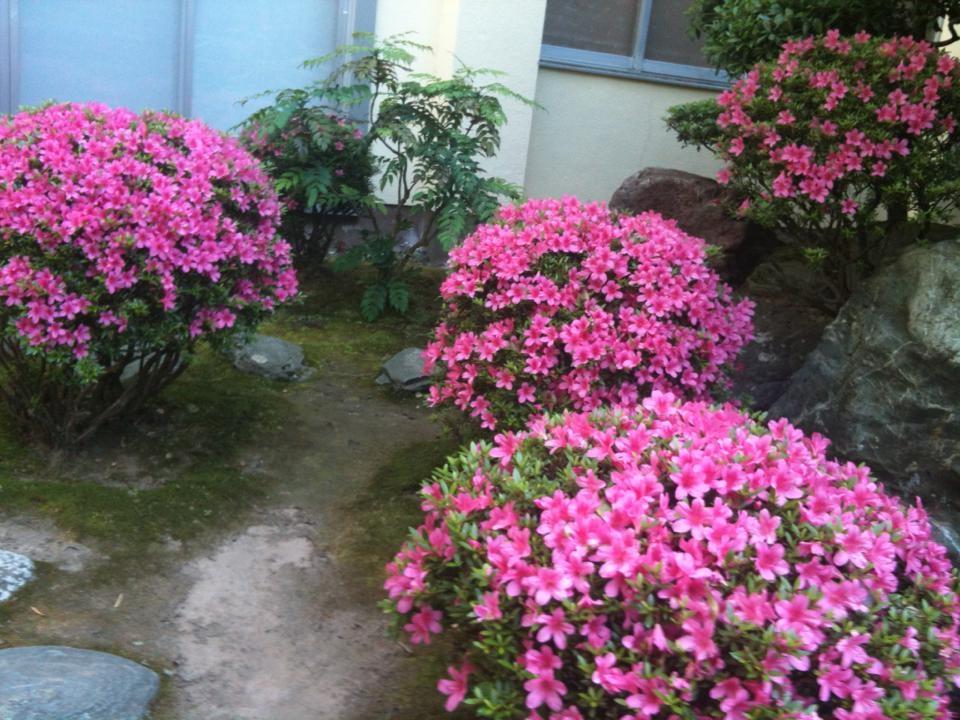 さつき中庭1