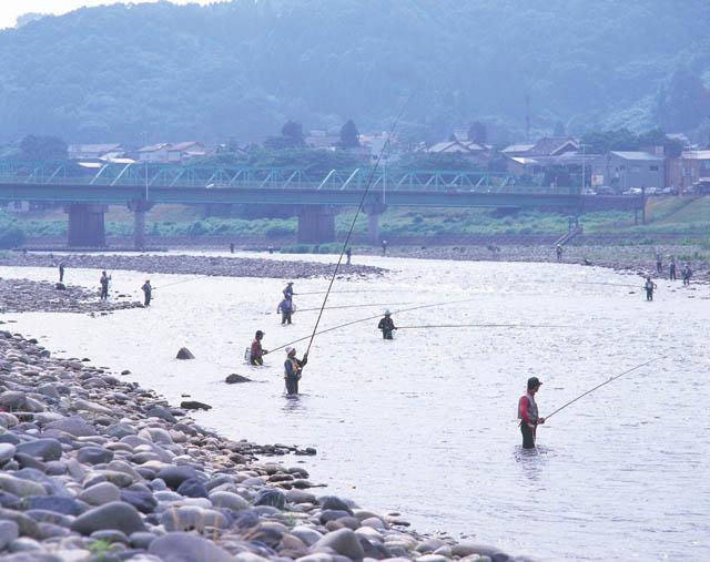 九頭竜川鮎釣り