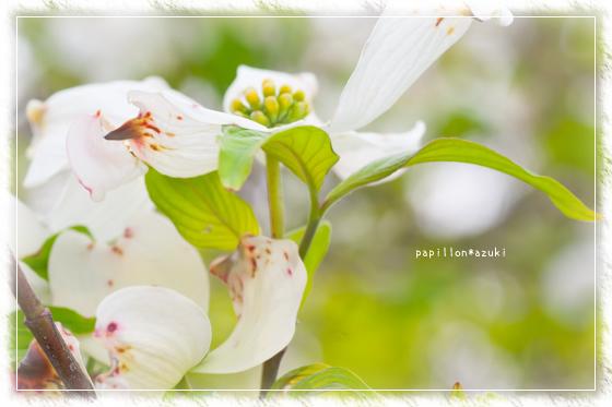 20140419_IMG_44.jpg