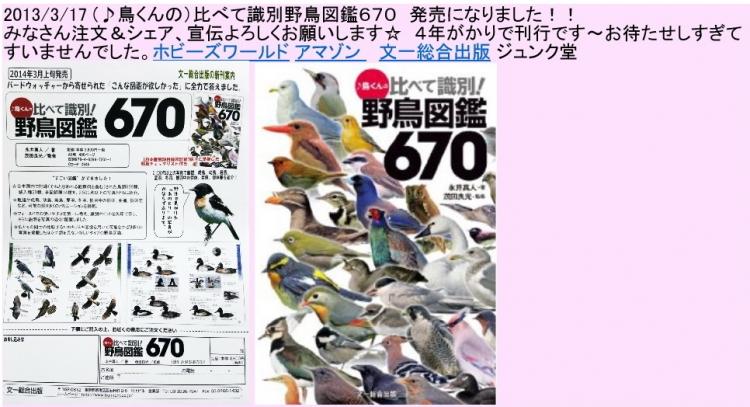 野鳥図鑑670